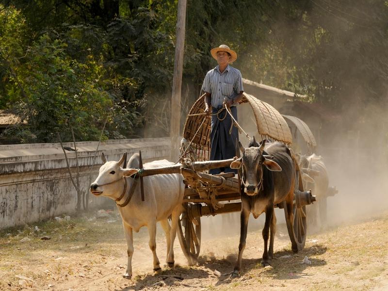 landbouwer_in_myanmar_20110705_1123772596